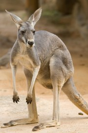 Vocabulario inglés para viajar a Australia